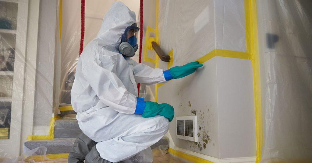 Pros And Cons Of Professional Mold Removal