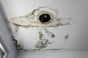 mold damage servicemaster savannah